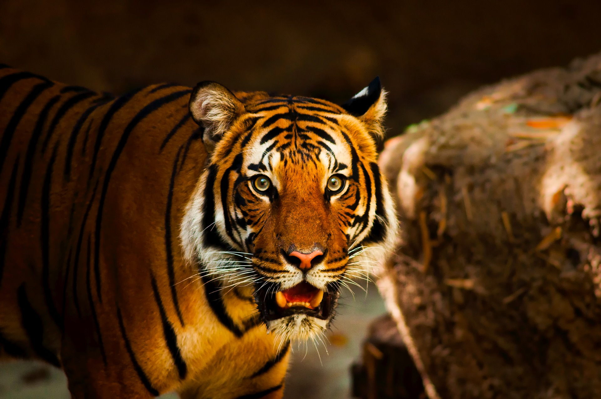 Neues Jahr, neuer Job?  Vermeiden Sie die Tigerfalle!